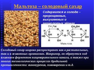 Солодовый сахар широко распространен как в растительных, так и в животных орг