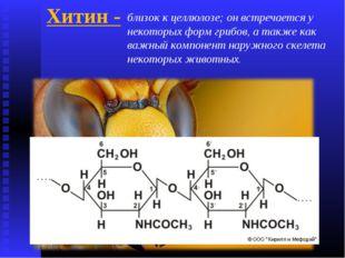Хитин - близок к целлюлозе; он встречается у некоторых форм грибов, а также к
