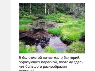 В болотистой почве мало бактерий, образующих перегной, поэтому здесь нет боль