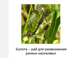 Болота – рай для размножения разных насекомых.