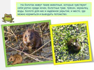 На болотах живут такие животные, которые чувствуют себя уютно среди кочек, б