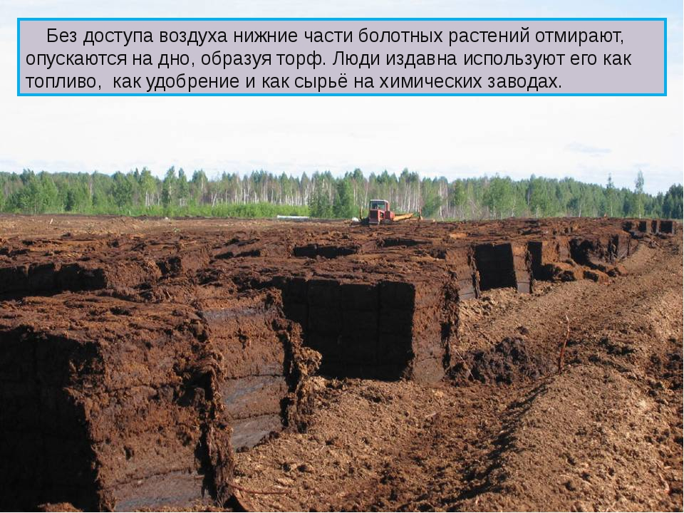Без доступа воздуха нижние части болотных растений отмирают, опускаются на д...