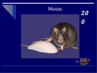 Мышь 200