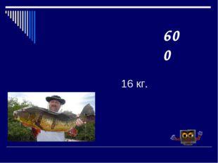 16 кг. 600