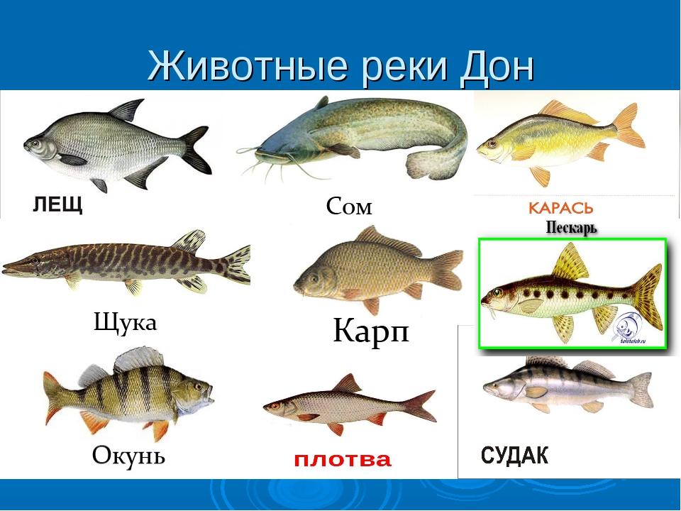 Речные обитатели фото с названиями