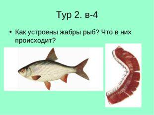 Тур 2. в-4 Как устроены жабры рыб? Что в них происходит?