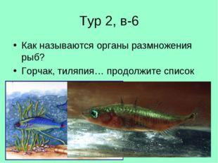 Тур 2, в-6 Как называются органы размножения рыб? Горчак, тиляпия… продолжите