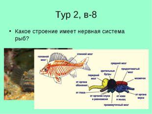 Тур 2, в-8 Какое строение имеет нервная система рыб?