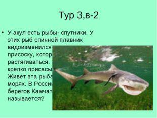 Тур 3,в-2 У акул есть рыбы- спутники. У этих рыб спинной плавник видоизменилс