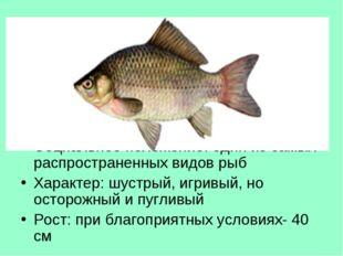 Тур 3, в-4 О какой рыбе идет речь? Национальность: семейство карповых Местожи
