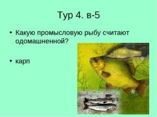 Тур 4. в-5 Какую промысловую рыбу считают одомашненной? карп