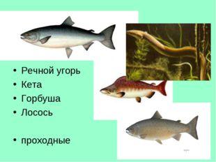Тур 5, в-7 Где обитают эти рыбы? Какое общее название они имеют? Речной угорь
