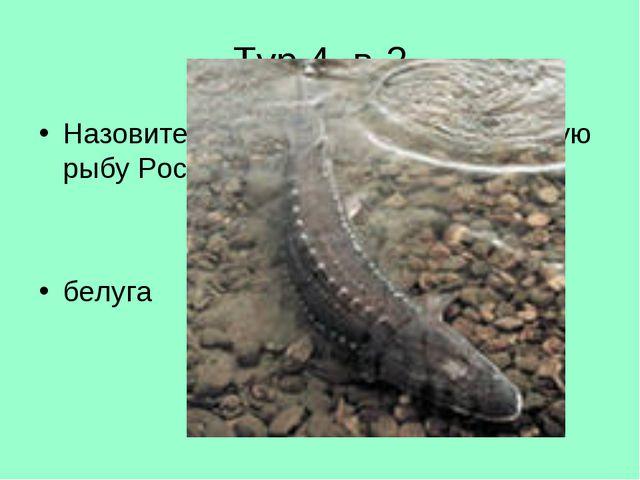 Тур 4. в-2 Назовите самую крупную промысловую рыбу России? белуга
