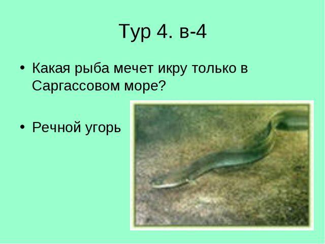Тур 4. в-4 Какая рыба мечет икру только в Саргассовом море? Речной угорь