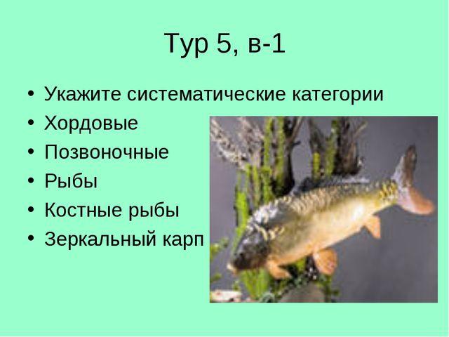 Тур 5, в-1 Укажите систематические категории Хордовые Позвоночные Рыбы Костны...