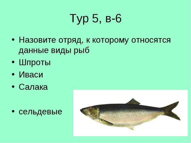 Тур 5, в-6 Назовите отряд, к которому относятся данные виды рыб Шпроты Иваси...