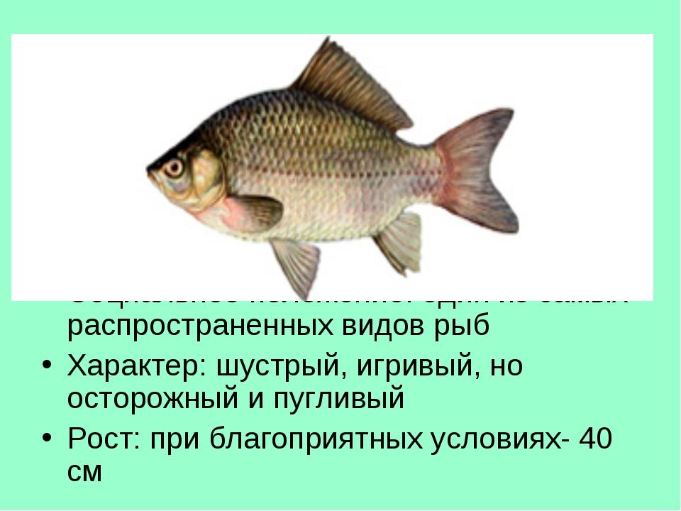 Тур 3, в-4 О какой рыбе идет речь? Национальность: семейство карповых Местожи...