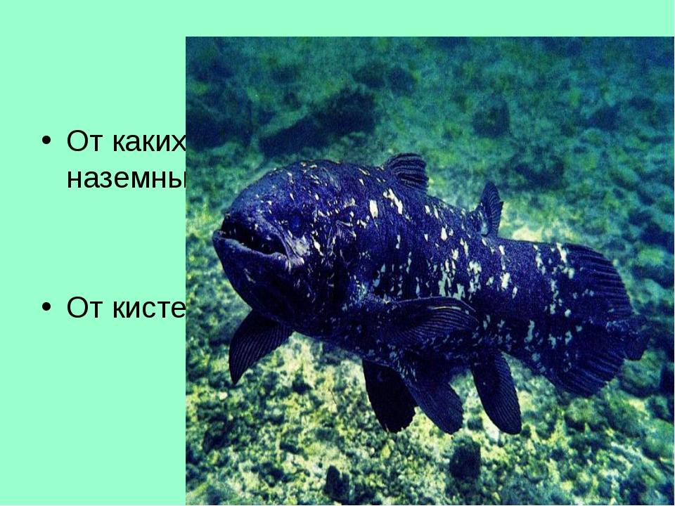 Тур 4. в-8 От каких рыб произошли первые наземные животные? От кистеперых рыб
