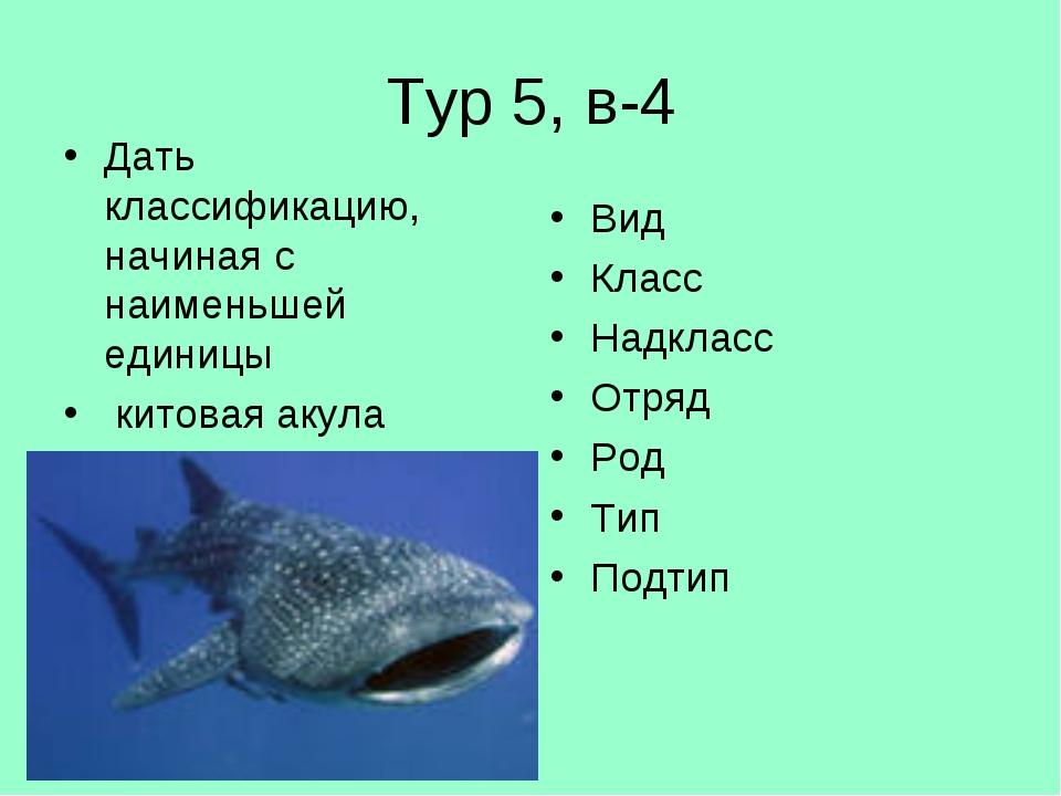 Тур 5, в-4 Дать классификацию, начиная с наименьшей единицы китовая акула Вид...