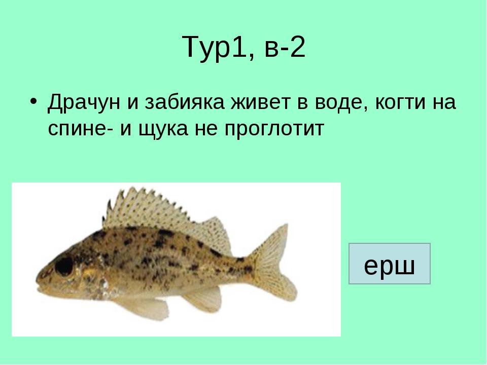 Тур1, в-2 Драчун и забияка живет в воде, когти на спине- и щука не проглотит...