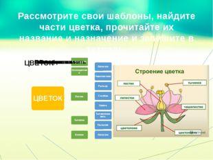 Рассмотрите свои шаблоны, найдите части цветка, прочитайте их название и назн