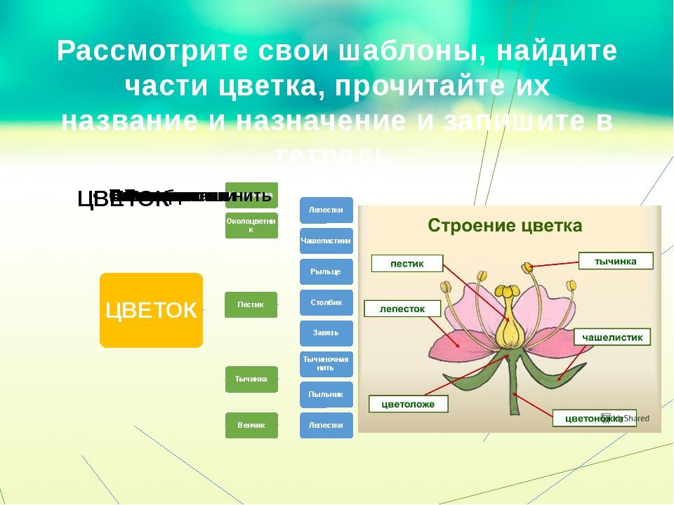 Рассмотрите свои шаблоны, найдите части цветка, прочитайте их название и назн...