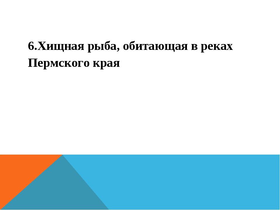 6.Хищная рыба, обитающая в реках Пермского края