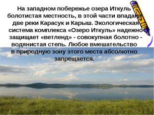 На западном побережье озера Иткуль болотистая местность, в этой части впадают