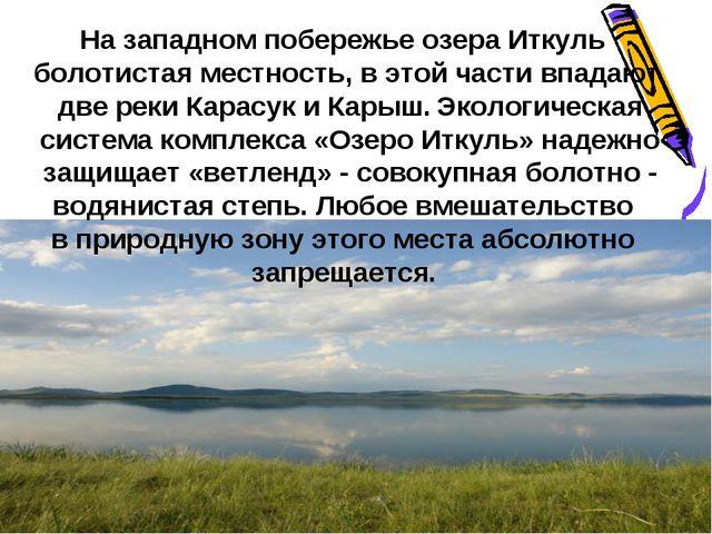 На западном побережье озера Иткуль болотистая местность, в этой части впадают...
