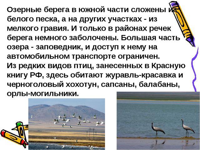 Озерные берега в южной части сложены из белого песка, а на других участках -...