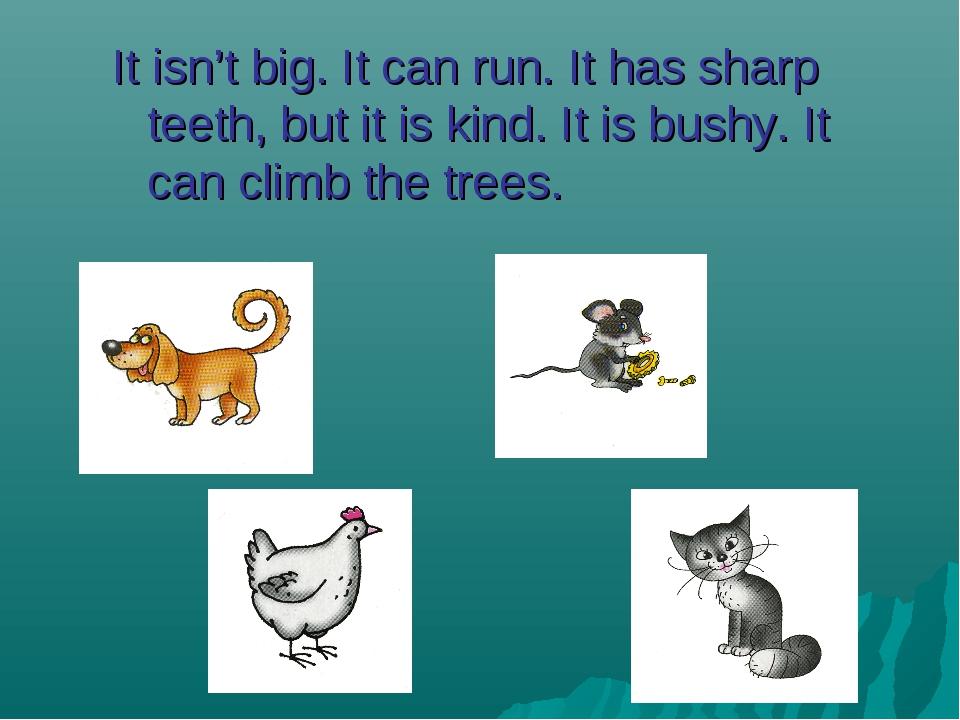 It isn't big. It can run. It has sharp teeth, but it is kind. It is bushy. I...