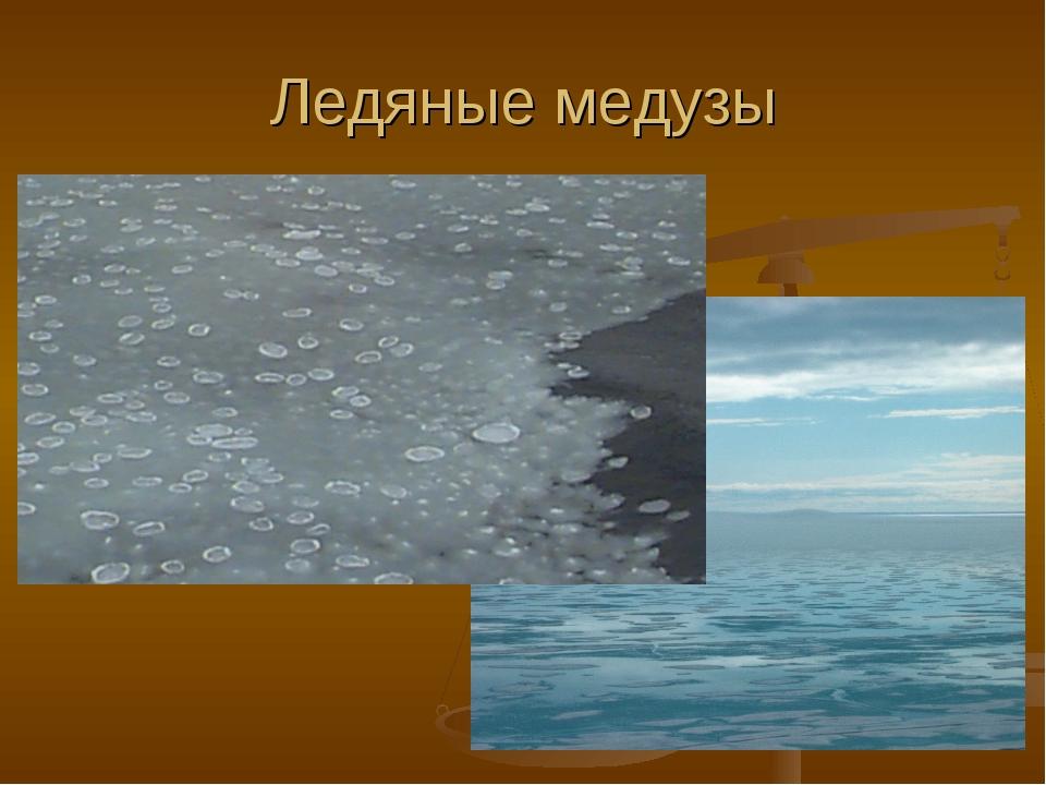 Ледяные медузы