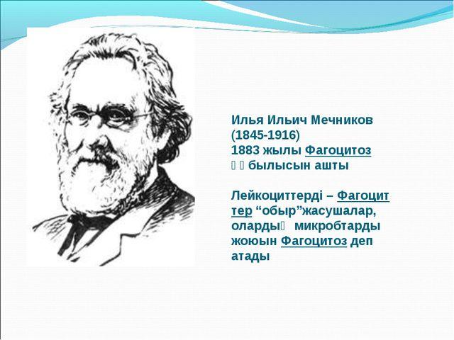 Илья Ильич Мечников (1845-1916) 1883 жылы Фагоцитоз құбылысын ашты Лейкоцитте...