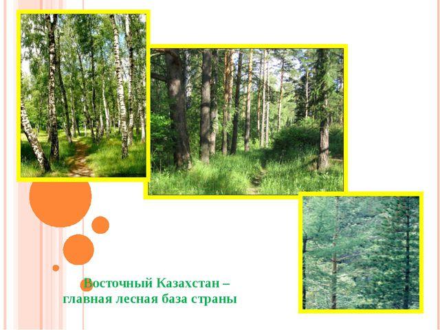 Восточный Казахстан – главная лесная база страны