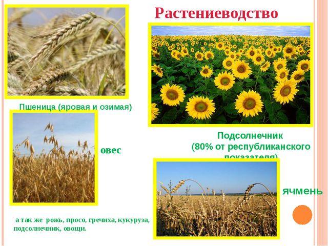 Растениеводство Пшеница (яровая и озимая) ячмень Подсолнечник (80% от республ...