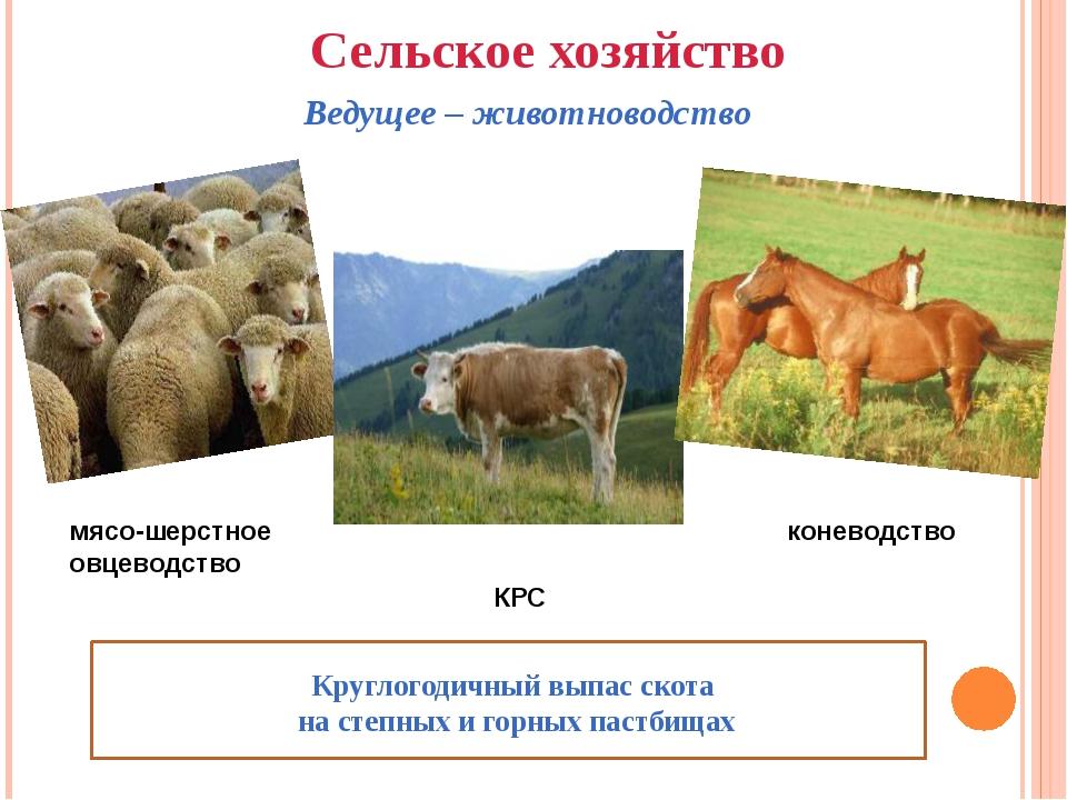 Сельское хозяйство Ведущее – животноводство мясо-шерстное овцеводство КРС Кр...