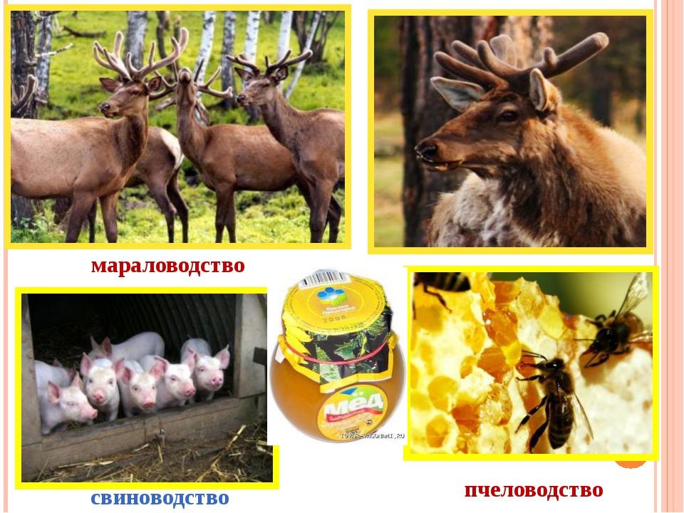 пчеловодство мараловодство свиноводство