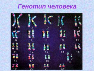 Генотип человека