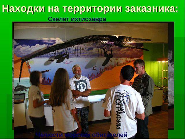 Находки на территории заказника: Челюсти морских обитателей Скелет ихтиозавра