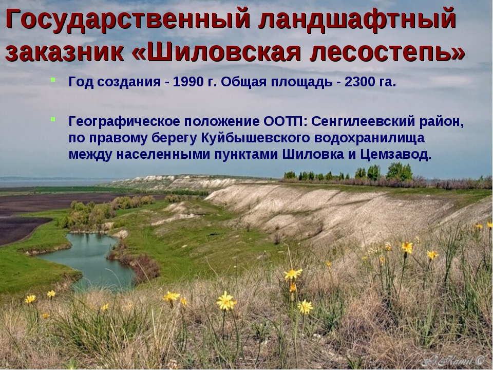 Государственный ландшафтный заказник «Шиловская лесостепь» Год создания - 199...