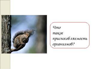 Что такое приспособляемость организмов?