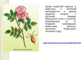 Кроме защитной окраски, у животных и растений наблюдаются и другие средства