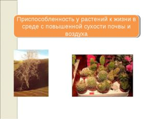 Приспособленность у растений к жизни в среде с повышенной сухости почвы и воз