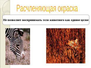 Не позволяет воспринимать тело животного как единое целое