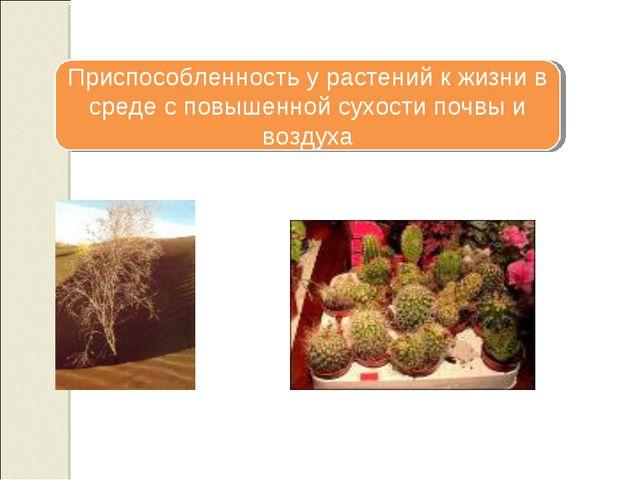 Приспособленность у растений к жизни в среде с повышенной сухости почвы и воз...