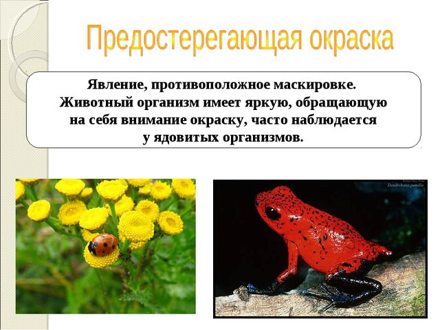 Явление, противоположное маскировке. Животный организм имеет яркую, обращающу...