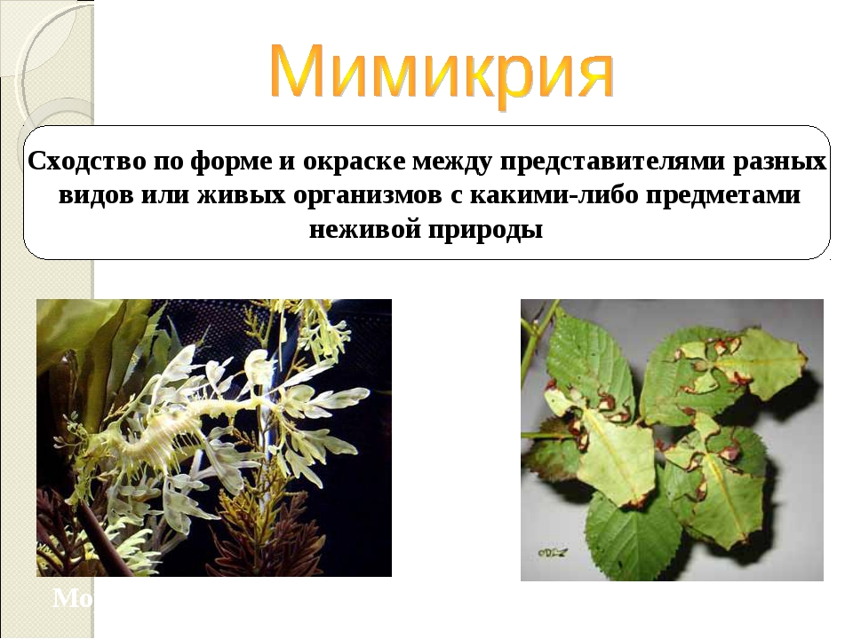 Сходство по форме и окраске между представителями разных видов или живых орга...