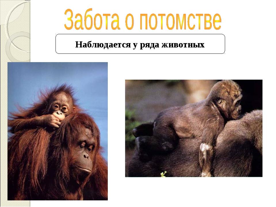 Наблюдается у ряда животных