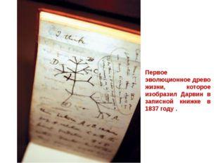 Первое эволюционное древо жизни, которое изобразил Дарвин в записной книжке в