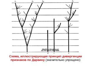Схема, иллюстрирующая принцип дивергенции признаков по Дарвину (значительно у